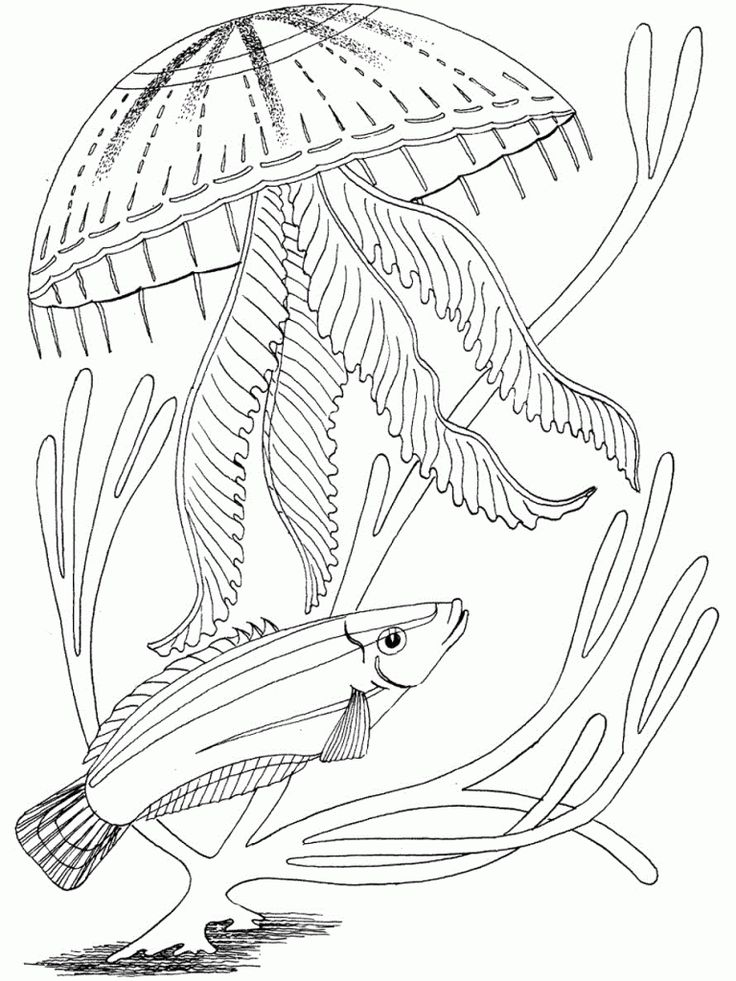 jellyfish coloring pages for kids - Jellyfish Coloring Pages Kids