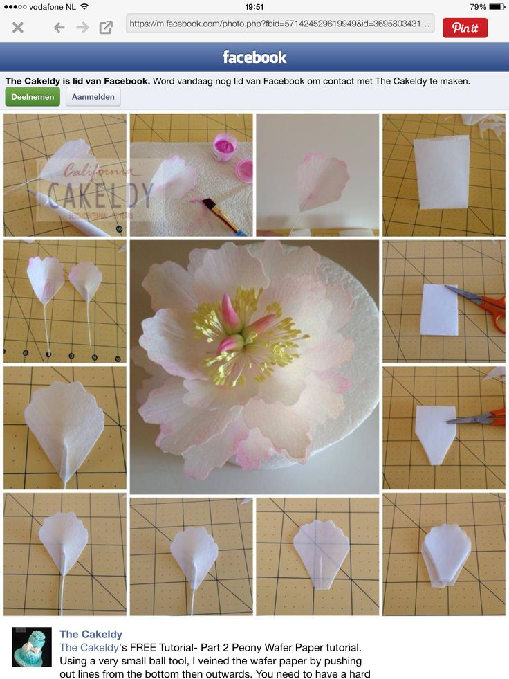 49 best decorating wafer paper flowers images on Pinterest ...