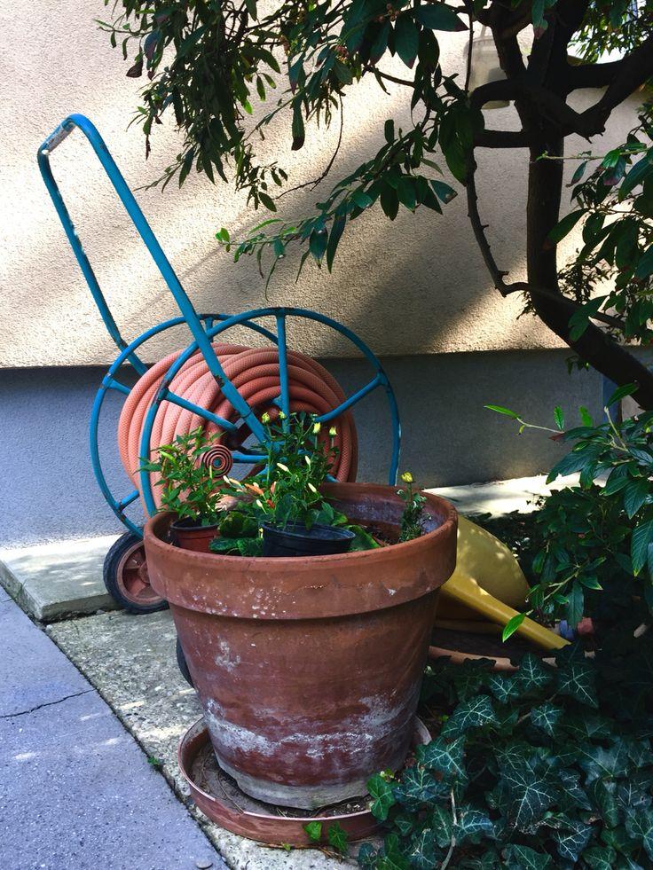 Jardín. Agua pa las matas