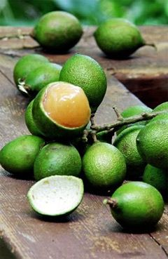 Spanish lime or Limoncillo, we called this quenipas. I used to eat these with my friends. Peel the skin, suck on the fruit, and spit out the seed. Yum! Mdb