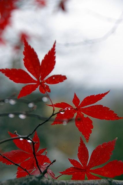 Siente, feel, texture, color, red, rojo, textura, feellings, sensaciones, sentimientos.