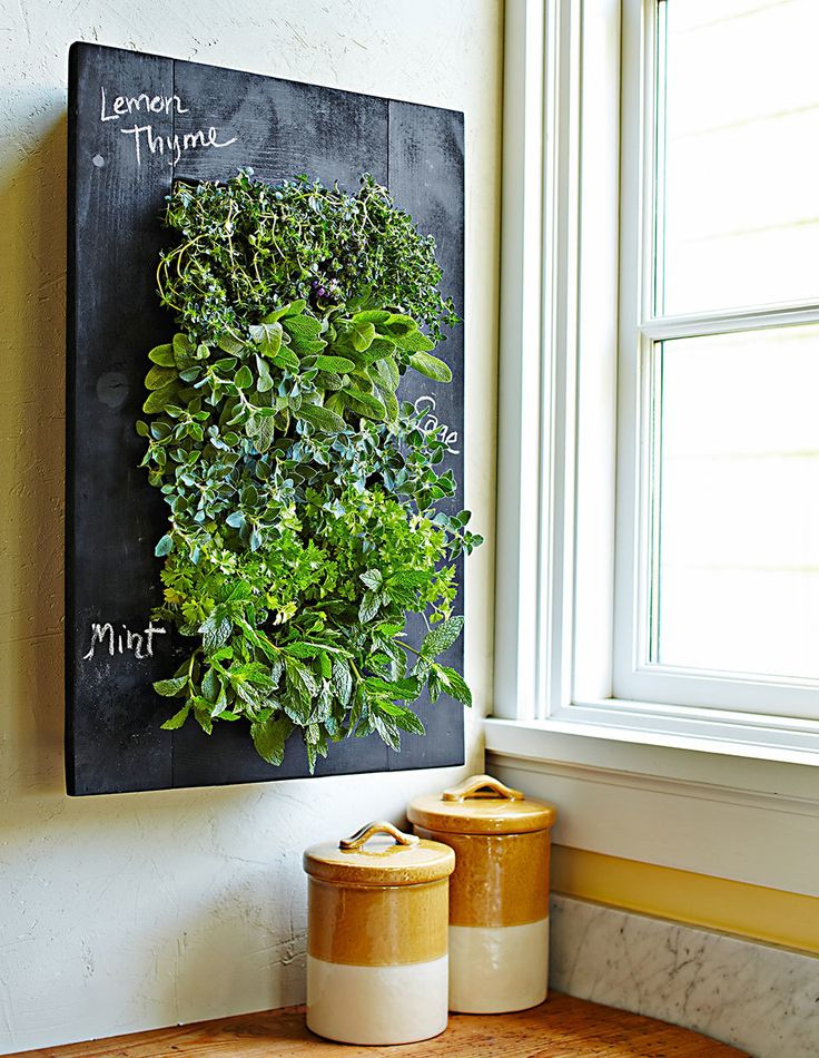 Your Ultimate Guide To Growing Herbs Indoors Living Wall 400 x 300