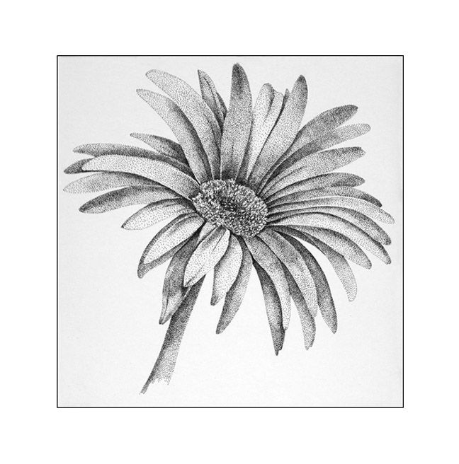 Daisy Flower Line Drawing : Best images about draw flowers on pinterest flower