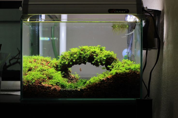 Best 25 nano aquarium ideas on pinterest nano tank for Freshwater fish tank setup