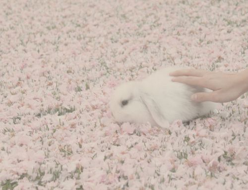 floral bunny {via} tea cupcake