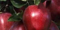How to Grow Dwarf Fruit Trees in Containers | eHow.com
