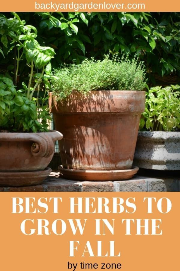 Best Herbs To Grow In The Fall For Your Climate Zone Best Herbs