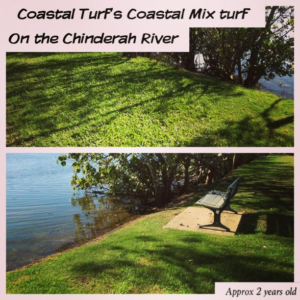 Sitting back and watch Coastal Turf's Qld Blue Couch grow by the cool Chinderah River