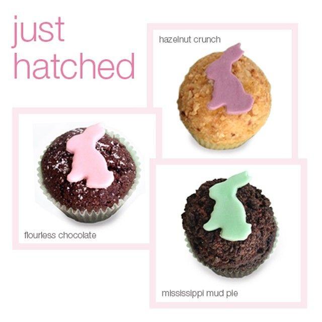 ... Hazelnut Crunch #eaterbunnycrunch, Flourless Chocolate Cake #passover