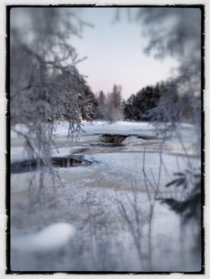 Koitelin talvi Kiiminkijoki