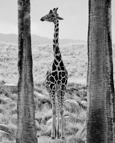 Giraffe Photo by Hudson Handel -- National Geographic Your Shot