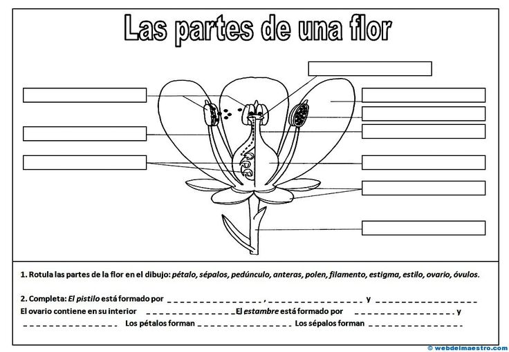 Partes de una flor - Recursos educativos y material didáctico para niños/as de Infantil y Primaria. Descarga Partes de una flor