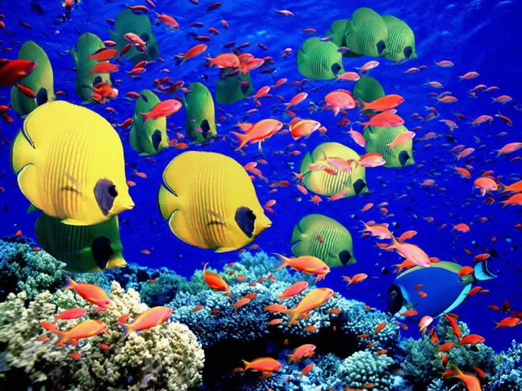 Abundant marine life. The Great Barrier Reef, Queensland. Such vivid colours.