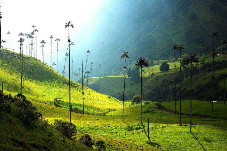 Valle de Cocora y sus Hermosas Palmas de Cera, Colombia