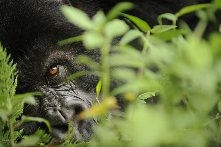 Planeta perdeu 50% de sua fauna em 40 anos « Herton Escobar