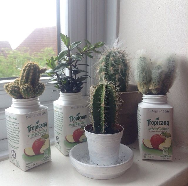 juice boxes make great cacti pots