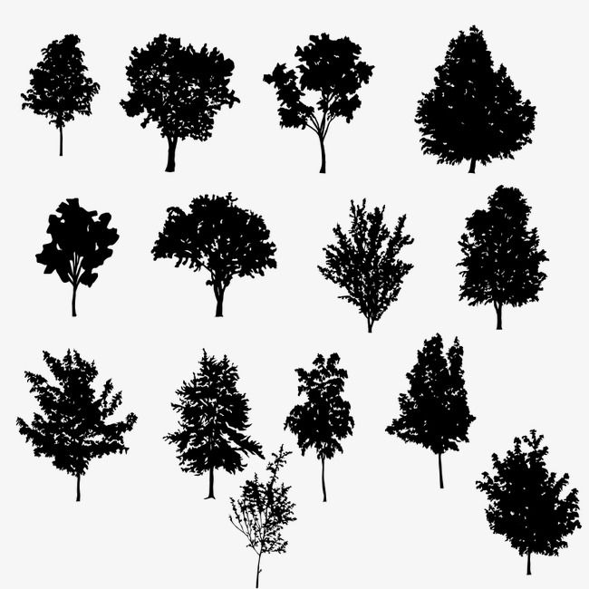 Tree Silhouette Black Trees Png Transparent Clipart Image And Psd File For Free Download Tree Silhouette Silhouette Png Clipart Images