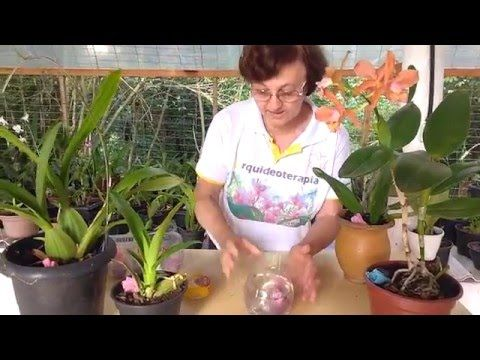 Trocando vaso da sua orquídea - YouTube                                                                                                                                                     Mais