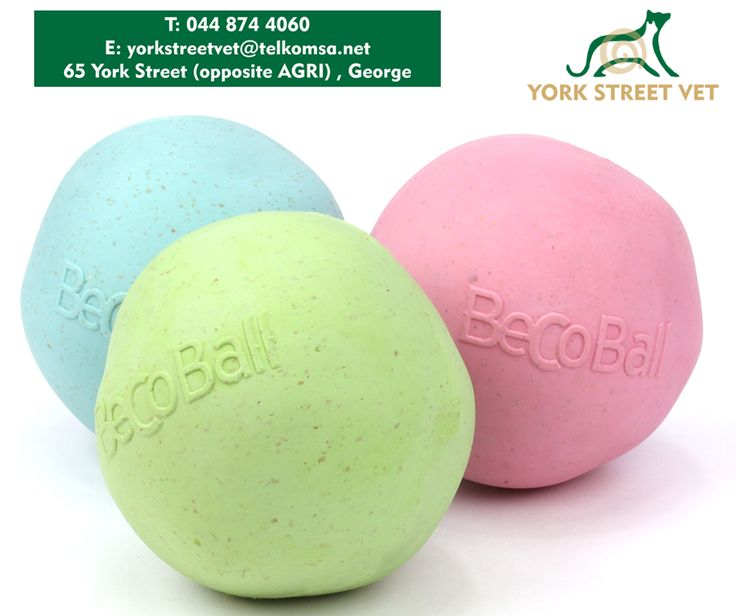 The #BecoBall is suitable for all breeds of dog and has been carefully designed to be a healthy and safe toy. Made from natural rubber and rice husk fibres, the Beco Ball is non-toxic, so you can rest assured that your dog won't be chewing on any nasty chemicals. Available at #YorkStreetVets. #dogs