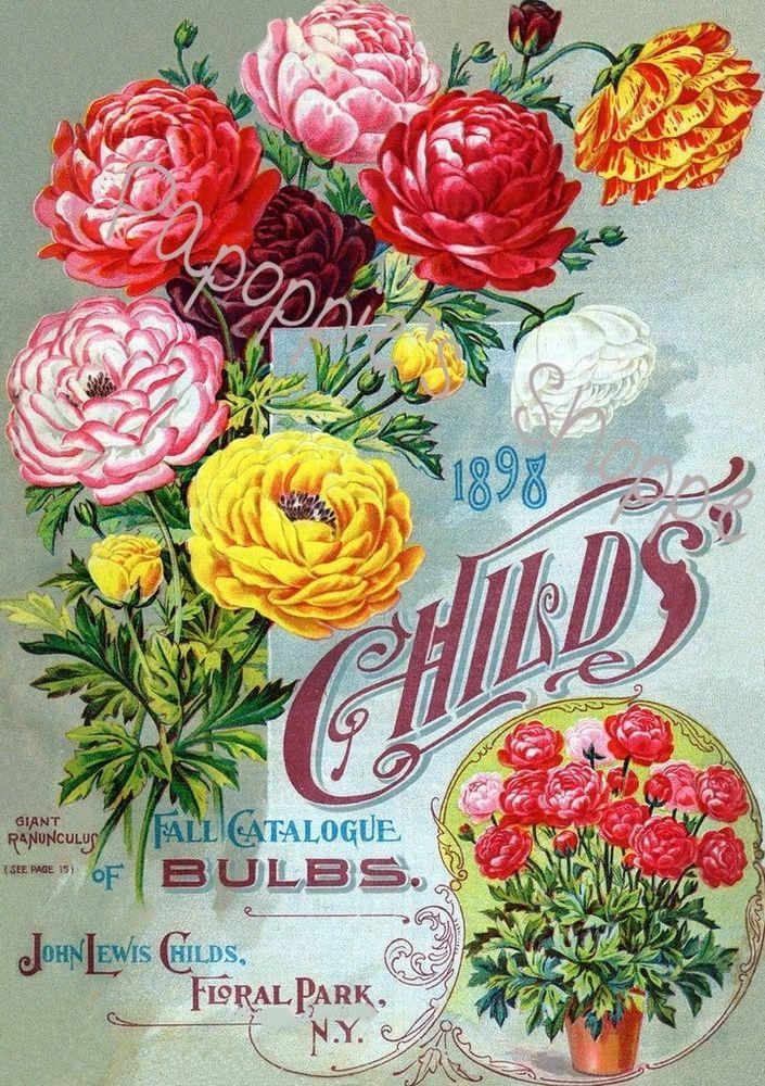 Fabric Block Vintage Ad Flower Bulbs John Lewis Child/'s 1898 Fall Catalog