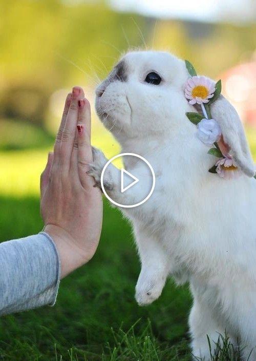 #kaninchen #röhren #lapin #pngLapin, Kaninchen, Röhren, Png  For Watch more vi…