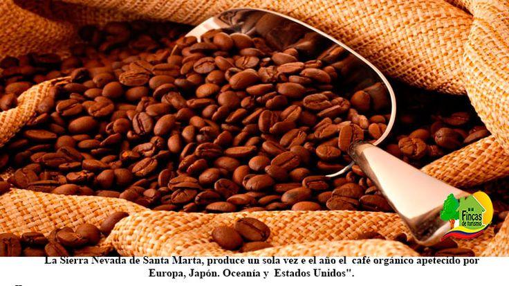 La Montaña Nevada de Santa Marta… Recoge el Mejor Grano de Café.  ||  <p>La Montaña Nevada de Santa Marta… Recoge el Mejor Grano de Café.5 (100%) 21 votes</p>  https://www.fincasdeturismo.com/la-montana-nevada-de-santa-marta-recoge-el-mejor-grano-de-cafe/?utm_campaign=crowdfire&utm_content=crowdfire&utm_medium=social&utm_source=pinterest  #PaquetesTuristicos  #FincasDeTurismo #AlquilerdeCabañas #AlquilerDeFincasEnElEjeCafetero