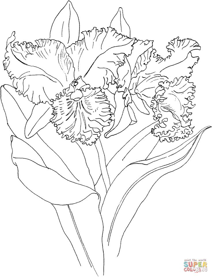 orchid coloring pages - photo#27