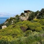The flowered Zingaro nature reserve in spring. The reserve of the Zingaro is one of the very few stretches of the coast of Sicily which is not contaminated by the presence of a coastal road. http://www.dreamsicilyvillas.com/guide/sicily-natural-sites/zingaro-nature-reserve/