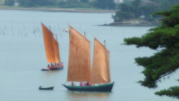 Sene Morbihan - Sinagots au large de l'ile aux moines