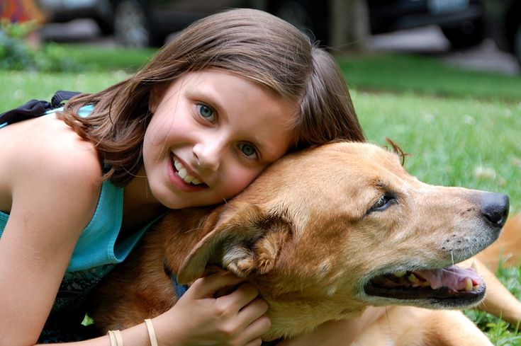 소녀, 개, 사랑, 애완 동물, 행복한, 귀여운, 젊은, 행복 한 강아지, 친구, 귀여운 소녀