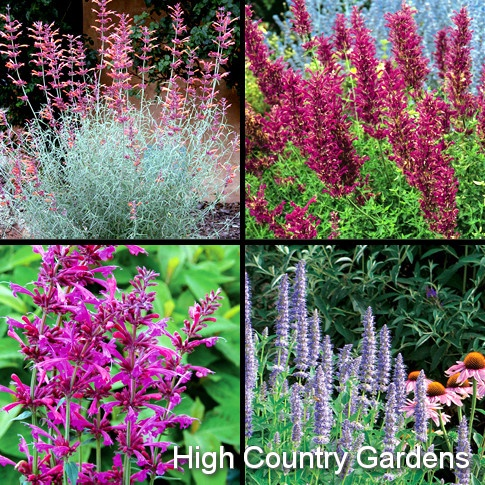 Flower Garden Ideas Colorado 152 best colorado landscaping images on pinterest   garden ideas