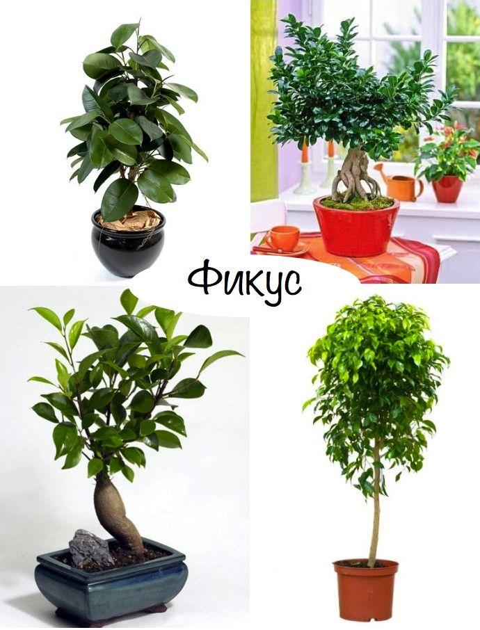 """Самые неприхотливые комнатные растения Блог """"Твой Дизайнер"""""""