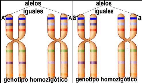 Conceptos básicos de la Genética Mendeliana