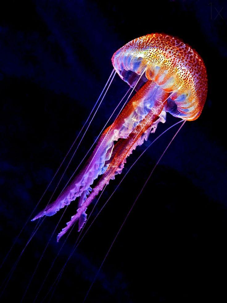 U Wish Jellyfish 30 best Jellyfi...