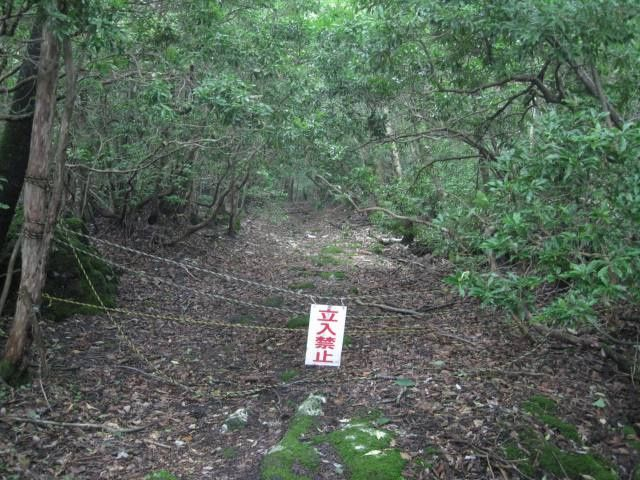 Aokigahara forest, famous commit suicide place, Japan