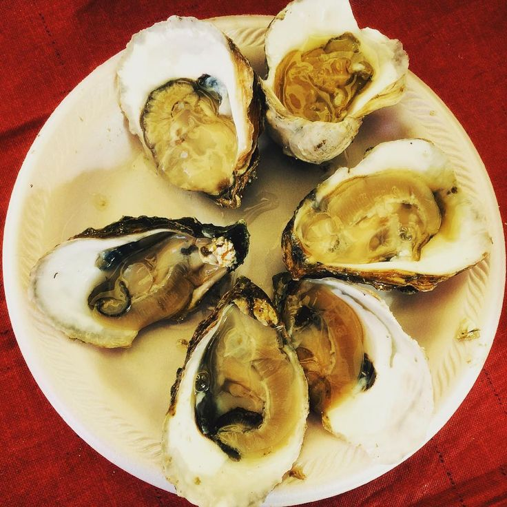 """""""Who likes oysters?  Newport seafood festival """""""