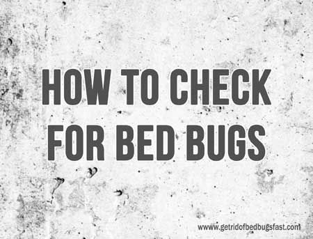 17 Best Images About Bed Bugs On Pinterest Nymphs Dust