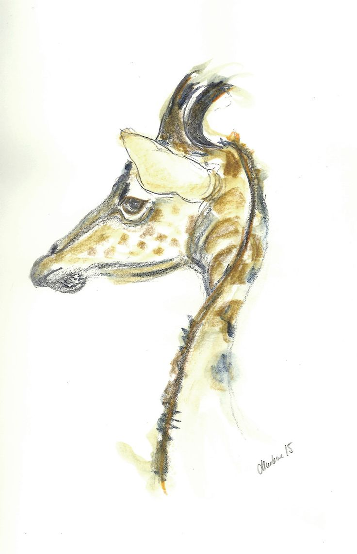 Giraffe. Drawing with pencil and watercolor-pencil by Marlene Jørgensen.