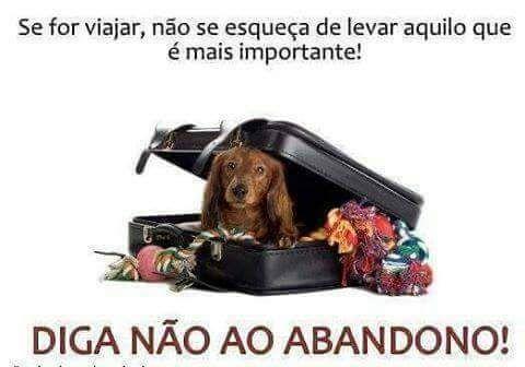 A PONTE DO ARCO-ÍRIS: Não ao abandono!!!
