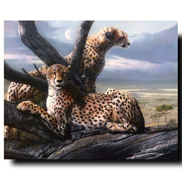 Cheetah Print | View to a Kill | Kevin Daniel