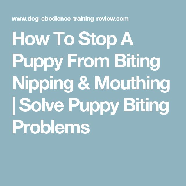 how to teach your dog to stop biting