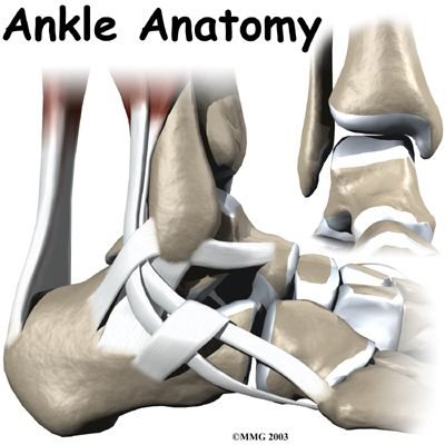 Patient Guide to Ankle Anatomy