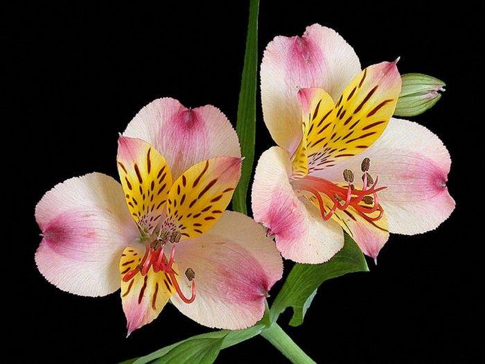 Орхидеи. Галерея фото