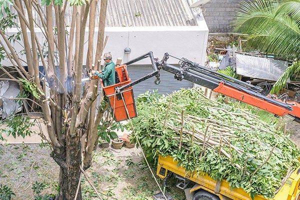 Precision Tree Service #precision #tree #services, #tree #care http://china.nef2.com/precision-tree-service-precision-tree-services-tree-care/  # Tree care in Covington Trees can make any property more desirable. The maintenance and upkeep, on the other hand, can be anything but. If tree care is something you don't have the time, inclination or love of heights to do yourself, Precision Tree Service is at your service! With a full range of tree care services, including pruning, trimming…
