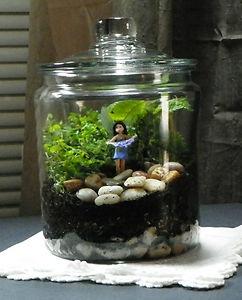 Woodland Fairy Terrarium Kit Glass Jar Choice of Fairy everything included 8 5