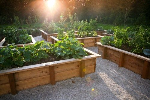 Another nice vegetable garden idea. We chose wood chips rather than gravel to fill in between our raised beds as it is easy on the knees and hides any spilled soil well. This is what I want to do at my house.