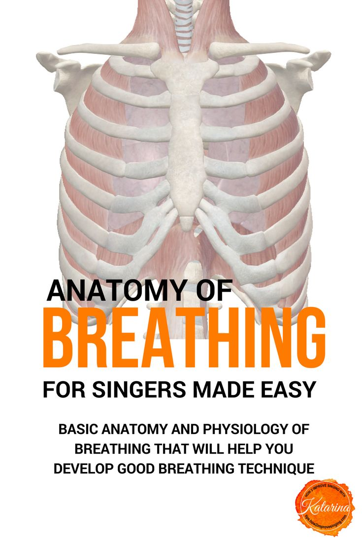 Anatomy of breathing for singers. Improve your breathing when singing.