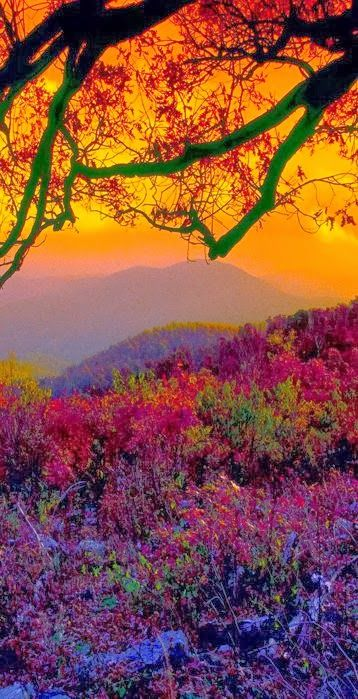 Autumn with a beautiful sunset at Shenandoah National Park, in the Blue Ridge Mountains of Virginia.