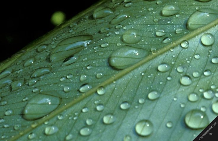 Tropical Rainforest Rainfall Graph | Download image Tropical Rainforest Climate PC, Android, iPhone and ...