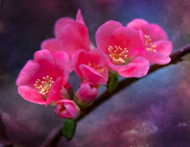 Photograph Pink Blossoms by Rick Schmidt on 500px